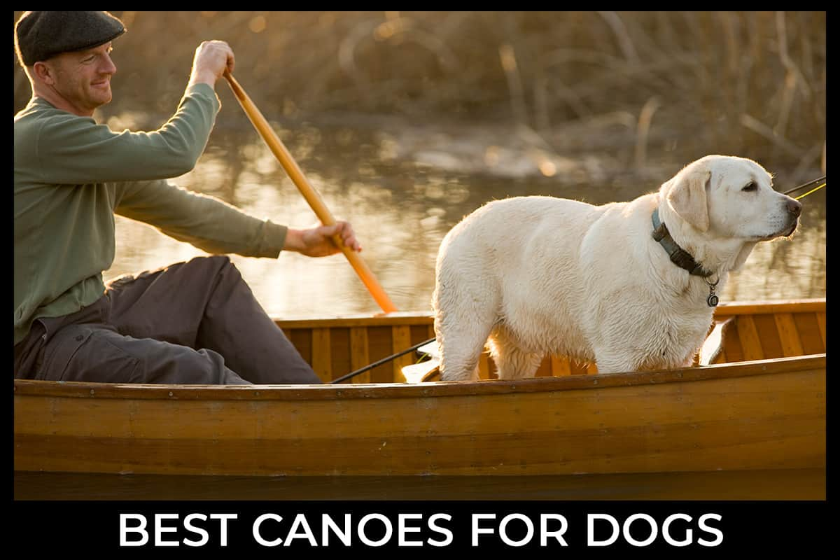 Best Canoes for Dogs