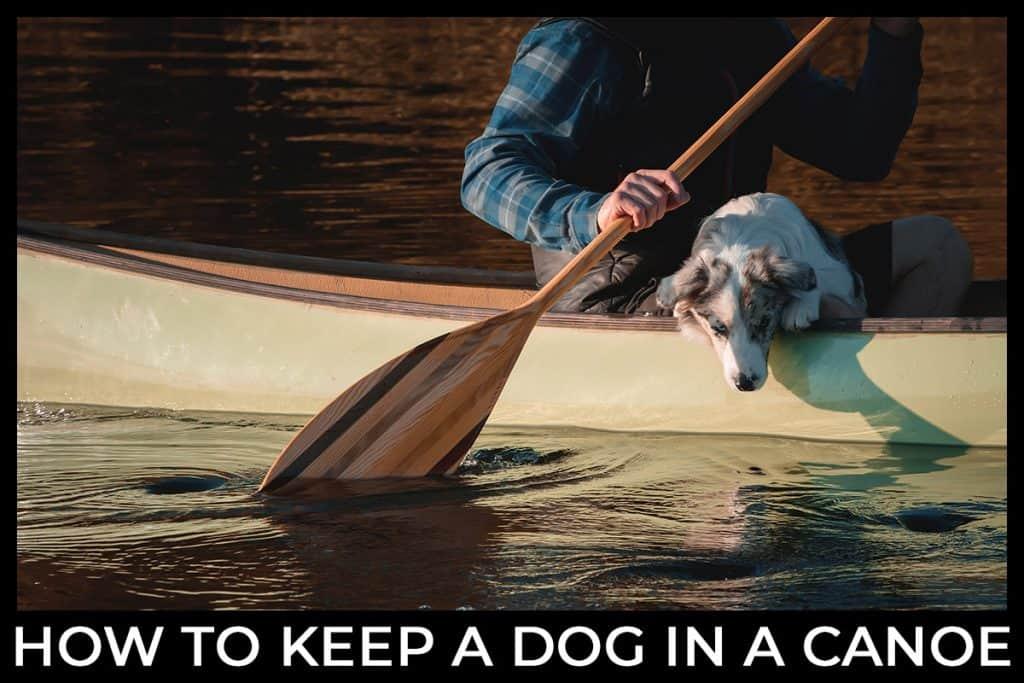 How do you keep a dog in a canoe?